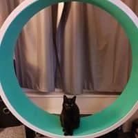 chat roue verte