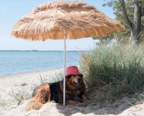 chien parasol plage